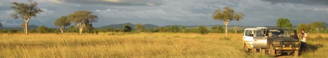 Savanna in the Mikumi-Ruaha ecosystem in central and southern Tanzania. Photo: Peter Stanley