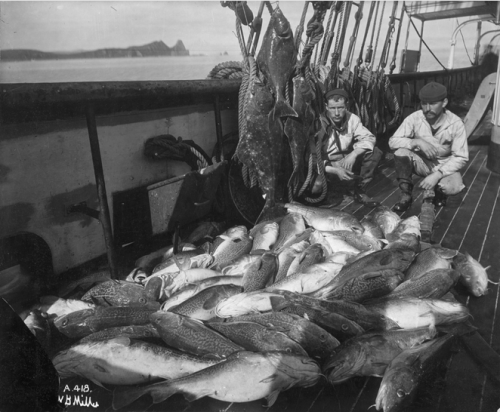 Cod fisherman with their haul, courtesy of Wikipedia.