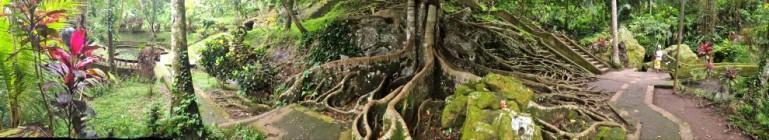 Tree roots, Ubud, Bali, Indonesia