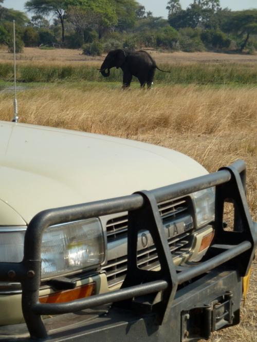 Katavi National Park, Tanzania. July 2014
