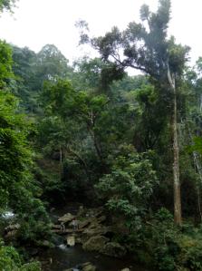 Udzungwa Forest