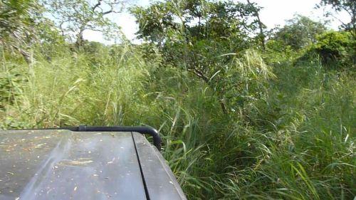 """Road"" to special campsite #2, Saadani National Park, Tanzania. 2012?"